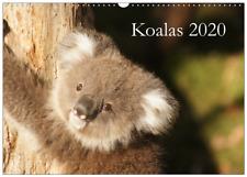 Kalender Koala Koalas 2020 (Wandkalender DIN A3 - 42x30 cm / Querformat)