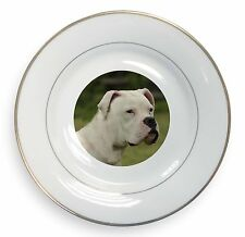 American Staffordshire Bull Terrier Dog Gold Rim Plate in Gift Box Ch, AD-SBT9PL