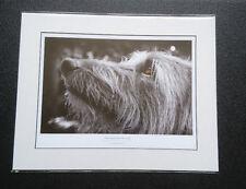 Hairy lurcher print greyhound whippet birthday photo shaggy dog gift mounted art