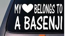 My heart belongs to a basenji sticker decal *D898*