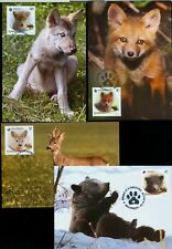 2012 Red Fox,Wolf,Bear,Deer,Footprints,Wild Cubs animals,Romania,6663,maxi cards