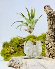 Live air plant (included) with Cement Holder, handmade, concrete ,geometric gift