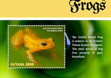Guyana  2018 Frogs I201805