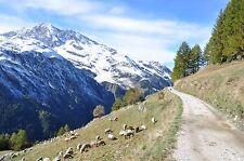 French Alps  FRIDGE MAGNET