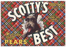 Scotty'S Best Vintage Pear Crate Label, Scottish Terrier Dog, An Original Label
