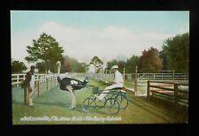1900s Oliver W. Jr. The Racing Ostrich Black Farm Boy Jacksonville Fl Duval Co