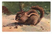 1941 Chipmunk Eating an Acorn Linen Postcard