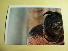 Figurina/Sticker BILLA DER TIERISCHEN REKORDE n°6 americkanischer bison new