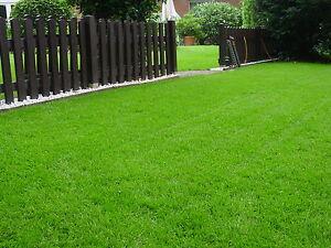 5 kg Rasen Rasensamen Rasensaat Sport + Spielrasen Gras Grassaat Nachsaat WOW