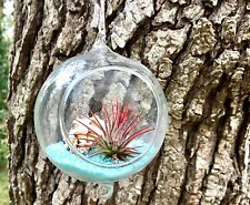 """3"""" Hanging Terrarium With Double Hooks"""