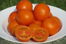 Jaune Flamme Heirloom Tomato Seeds- 25+  2017 Organic Seeds    $1.69 Max. Shipp.