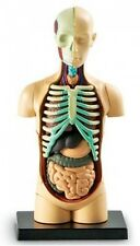Learning Resources Human Body Model, New, Free Shipping