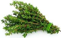 Seeds Antiseptic Thyme Herbs Medicinal Plant Perrenial Organic Russian Ukraine