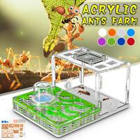 Acrylic Ant Nest Ant Food Feeding Area Ant Live Housing Farm Formicarium