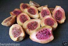 50 Opuntia xoconostle Seeds, joconostle, matudae,  Acidic Medicinal Cactus Fruit