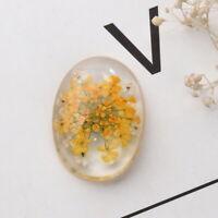 10 Glascabochons Cabochons Perlen zum Kleben mit Orange getrocknet Blume Oval A7