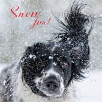 Charity Christmas Card Pack - Snowy Spaniel (10 Cards of 1 Design)
