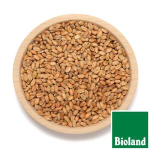 25 Kg Bio Weizen Bioland 100% Bio Brotgetreide Bio Weizen 25Kg