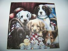 1 seltene Serviette Lovely Dogs Hunde Welpen Collie Retriever Dalmatiner Labrado