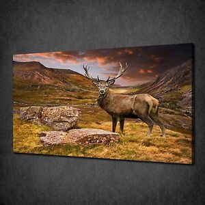 RED DEER STAG STORMY SKY ANIMAL CANVAS WALL ART PRINT PICTURE READY TO HANG