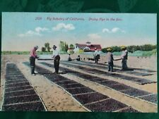 c. 1910 ANTIQUE POSTCARD, DRYING FIGS IN THE SUN OF CALIFORNIA