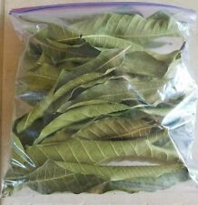 Fresh Dried Mango leaves 100% ORGANIC Medicine Natural 80 + LEAVES FROM CEYLON