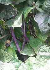CLIMBING/POLE BEAN  'Purple King'  25 Heirloom  seeds, Aunty K's Heritage Seeds
