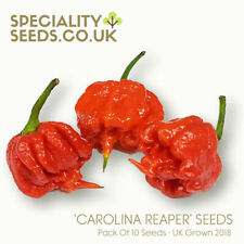 """Carolina Reaper Chilli Pepper Seeds - Grow Your Own """"World's Hottest Chilli"""""""