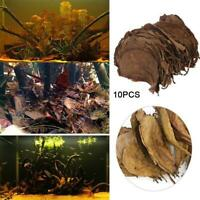 10pcs Natural Catappa Leaves Almond Leaf Fish Cleaning Treatment Aquarium Tank