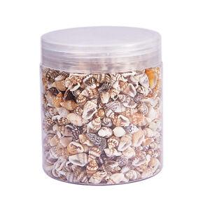 Lots Mixed Sea Shells Assorted Natural Seashells Conch Crafts DIY Decoration