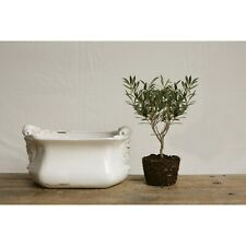Large Decorative Terracotta Cachepot Planter Pot, White, 12.5 Lbs