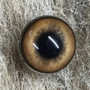 Taxidermy/model making/needle felting eyes - Dog 18mm (Z)