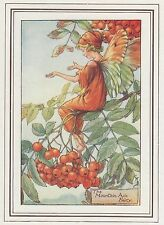 CICELY MARY BARKER c1930 THE MOUNTAIN ASH FAIRY Painting Vintage Art Book Print