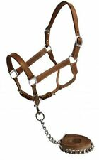 Showman Horse Size Medium Leather Halter with Chain Lead