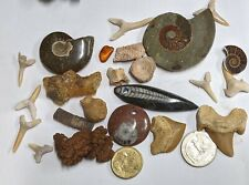 FOSSIL COLLECTION - Dinosaur Ammonite Shark Snake Stingray Orthoceras (#U362)