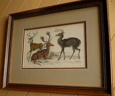 SPOTTED DEER, REINDEER, HAND COLORED LITHOGRAPH OLD PRINT, VINTAGE HIGH QUALITY