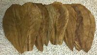 10 Seemandelbaumblätter 16cm - 20cm originale selbst getestete Catappa Leaves