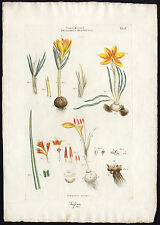 Antique Print-CROCUS SATIVUS-SAFFRON-IRIDACEAE-FLOWER-Miller-1770