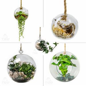 Dekoglas Kugelvase zum Hängen Auswahl 10 15 29 cm Pflanzenglas Pflanzvase