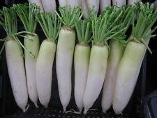 100+ DAIKON MINOWASE RADISH Organic Non-GMO Seeds Fall/Spring Garden/Containers