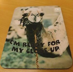 Camel mousemat , camel mousepad , camel gift ornament with silly saying