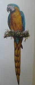 Gordon Hanley, L Edition Print - Classic Bird Study Series - 'Blue Yellow Macaw'