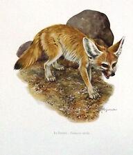 Impression Affiche Histoire Naturelle le Fennec , fennecus zerda