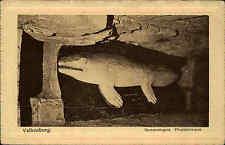 VALKENBURG Fisch Motiv Gemeentegrot Plioplaticarpus Niederlande Holland ~1930/40