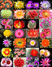 COLOR CACTUS MIX @j@ exotic cacti flowering desert succulent plant seed 20 seeds