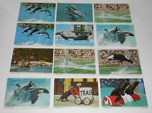 Vintage SEAWORLD 16 Postcard Lot Shamu Killer Whale Dolphins Show History Kids