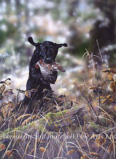 Labrador dog limited edition print by Paul Doyle. Shooting, Game bird. wildlife