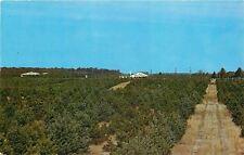 Bristol Indiana~Eby's Pines~Christmas Tree Farm~1960 Postcard