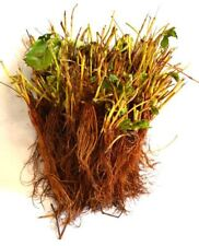 70 Everbearing Strawberry Bare Root Fruit Live Plants 3 Pound Bareroot Plant NEW