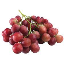 Red Globe Grape Crimson Vine Grapes Seeds 10 PCS LARGE BERRY!
